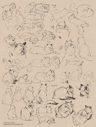 cat sketches by shideh deviantart com cats in art u0026 illustration