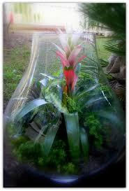 223 best indoor garden images on pinterest gardening plants and