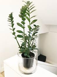 easy to care for houseplants u2013 elma steyl