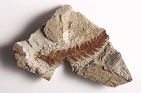 fossils help scientists build a picture of the past u2014and present