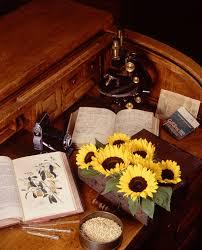 history of botany wikipedia