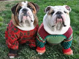 12 adorable dogs in ugly holiday sweaters teen com huffpost