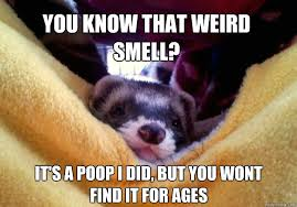 Ferret Meme - that awkward day your niece found one of your sex toys in the
