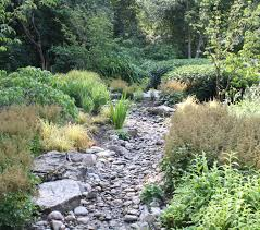 what are native plants dry creek beds turn to running rivers during the rainy seasons