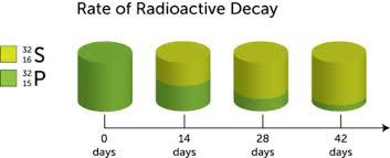 radioactive half life ck 12 foundation
