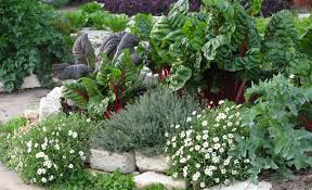 Edible Garden Ideas Landscaping Ideas In Mississippi Small Backyard Landscaping
