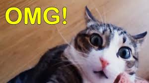 Memes Cat - funny cats videos and cat memes youtube