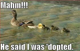 Funny Duck Meme - he said i was dopted funny duck caption