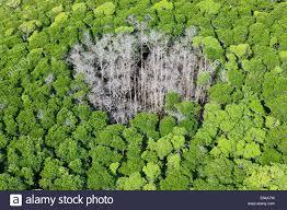 daintree rain forest stock photos u0026 daintree rain forest stock