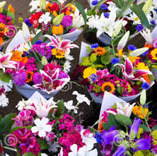Flowers Wholesale Fresh Flowers Wholesale Uk Wedding Flowers Triangle Nursery
