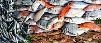 pesci alimentazione il pesce nella corretta alimentazione staibene it floridence info