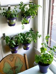 window herb gardens lawn garden landscape garden kitchen window shelv garden purple
