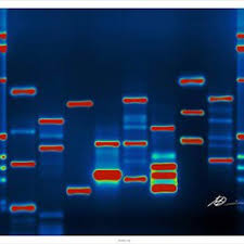 dna mapping the genetics company 12 photos geneticists az