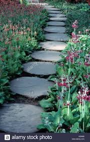 timber stepping stone path with primula bonfire stock photo