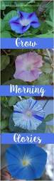 best 25 morning glory wall ideas on pinterest morning glory