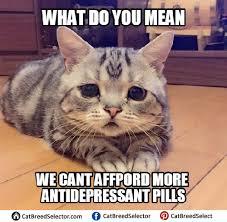 Cats Memes - sad cat meme funny cute angry grumpy cats memes pinterest