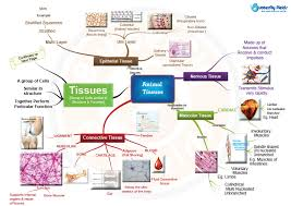 map types types of tissues concept map butterfly edufields