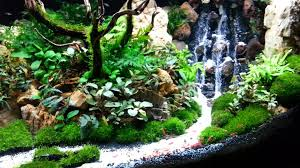 Aquascaping Plants Aquascape The Beauty Of The Inside Water Garden Inspirationseek Com