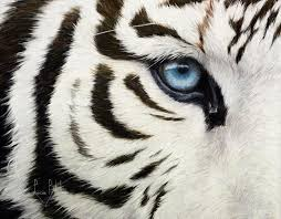 white tiger paintings america