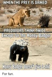 Honeybadger Meme - when the prey is armed predators think twice honey badger doesnt