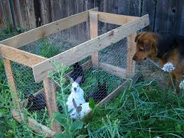 Rabbit Hutch Plans For Meat Rabbits Meat Rabbits The Bad Egg