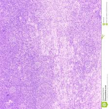 light purple concrete wall royalty free stock images image 32151079