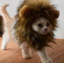 lion halloween costume for dog halloween costumes