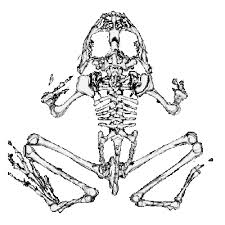 lbnl dsd whole frog project