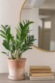 three easy care houseplants made to be lovely