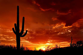 Arizona wildlife tours images Southern arizona history and wildlife tour brushbuck wildlife tours jpg