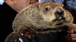 groundhog 2017 u0026 channel watch punxsutawney phil