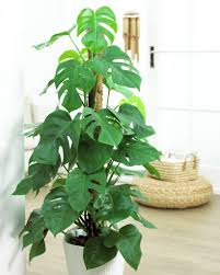 home plants decor swiss cheese plant decoration ideas in your office