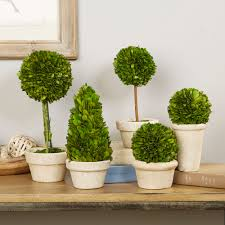 Preserved Boxwood Topiary Trees Preserved Boxwood Topiaries U0026 Reviews Birch Lane
