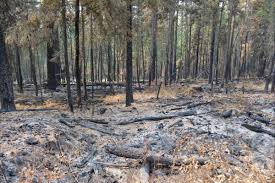 Wildfire Bc Clinton by B C Wildfires 2017 Archives Vernon Morning Star