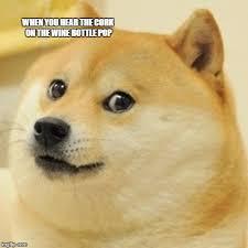 Gay Seal Meme Generator - meme generator imgflip amusement global omg pinterest meme