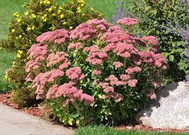 garden smarter when you plant these 5 low maintenance perennials