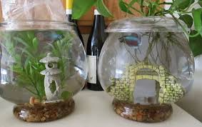 Betta Fish Decorations Green Jean Cleaning Fish And Feeding Plants