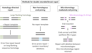 Flag Tag Dna Sequence Pitching Mmej As An Alternative Route For Gene Editing