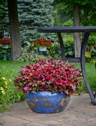 overwintering pretty potted perennials and shrubs proven winners