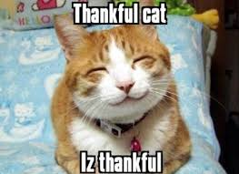 kitnipbox weekly roundup thanksgiving cats edition
