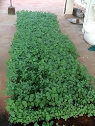 roof garden plants about terrace garden chennai roof garden kitchen garden