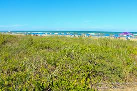 South Carolina vegetaion images The beach of south padre island texas stay adventurous jpg