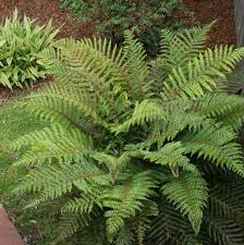 native pot plants coastal gardening shade loving plants for the sea coast north