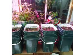 hybrid aquaponic soil indoor winter garden