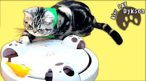 new toy for kitten dykson pounce pet safe funny cats