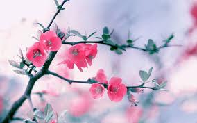 awesome pink flowers wallpaper u2013 hd wallpaper sea