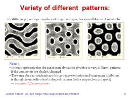 pattern formation zebra jochen triesch uc san diego 1 pattern formation in neural fields
