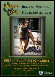 belgian shepherd quotes comments on u0027puppies join border patrol effort to sniff out smugglers u0027