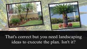 palm tree landscaping ideas youtube