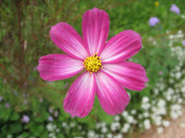 Flower by Picture Flower Wallpaper World Fleurs Pinterest Aster